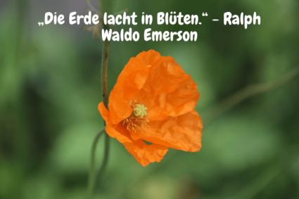 """Orange Mohnblume - """"Die Erde lacht in Blüten."""" - Ralph Waldo Emerson"""