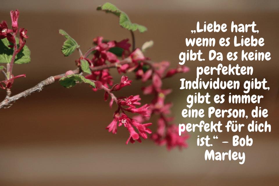 """""""Liebe hart, wenn es Liebe gibt. Da es keine perfekten Individuen gibt, gibt es immer eine Person, die perfekt für dich ist."""" – Bob Marley"""