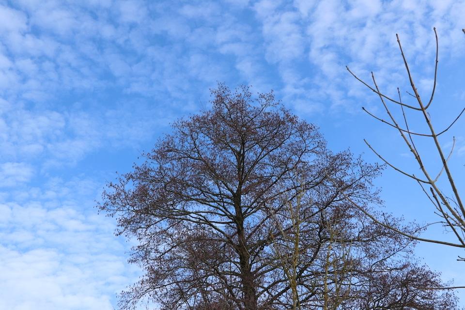 An etwas anderes denken - Freiheit Grafik Baum in freier Natur