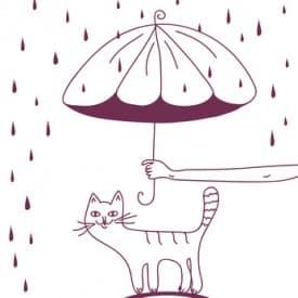 Regen und Niederschlag macht die Katze schlau