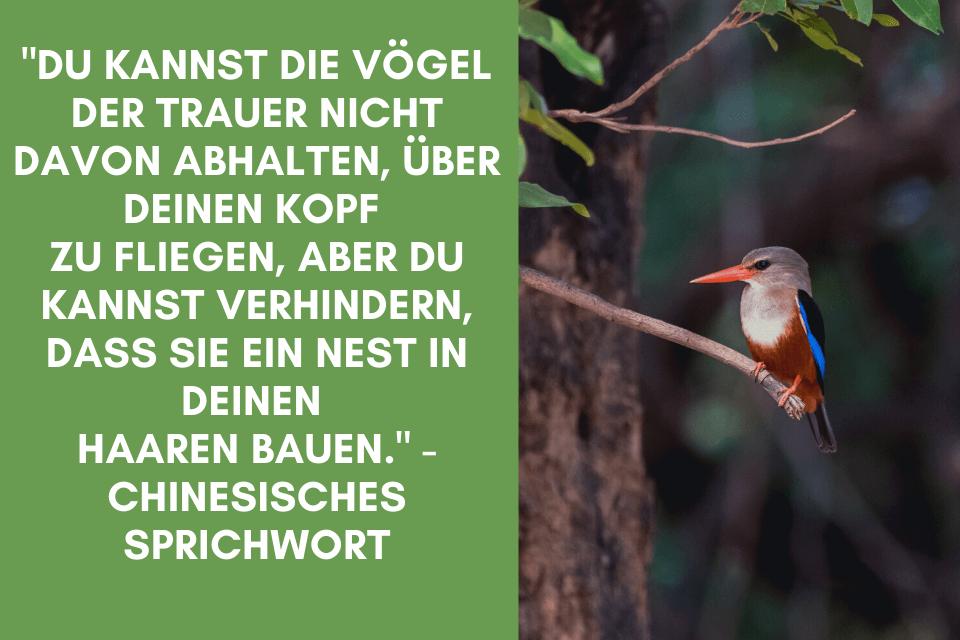 """Ein Vogel baut ein Nest - """"Du kannst die Vögel der Trauer nicht davon abhalten, über Deinen Kopf  zu fliegen, aber Du kannst verhindern, dass sie ein Nest in Deinen  Haaren bauen."""" - Chinesisches Sprichwort"""