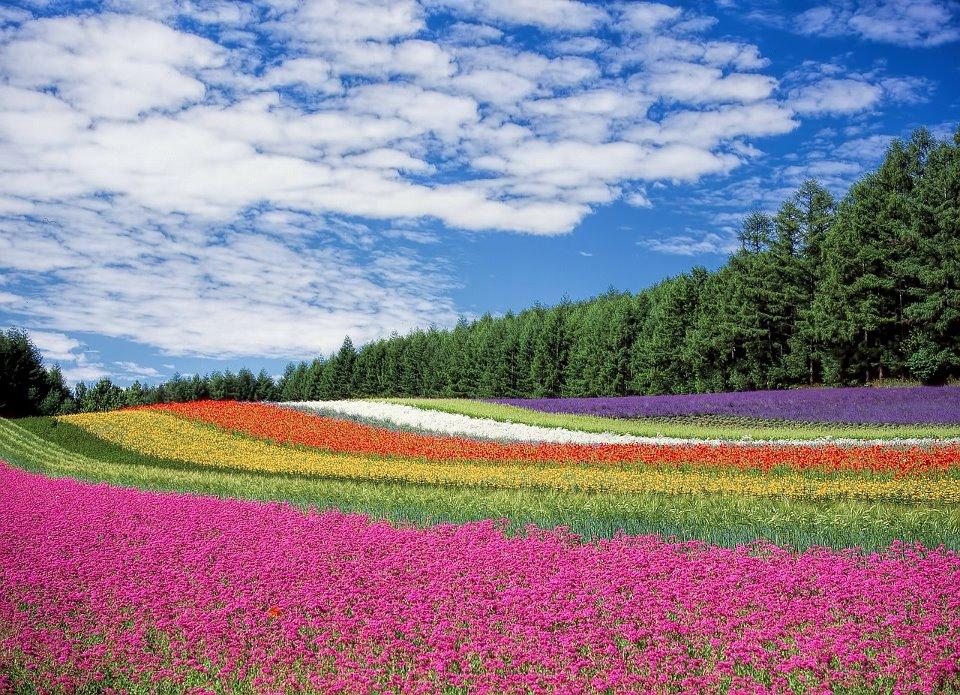 Ein buntes Blumenfeld mit vielen Farben - Das Geheimnis der Farben