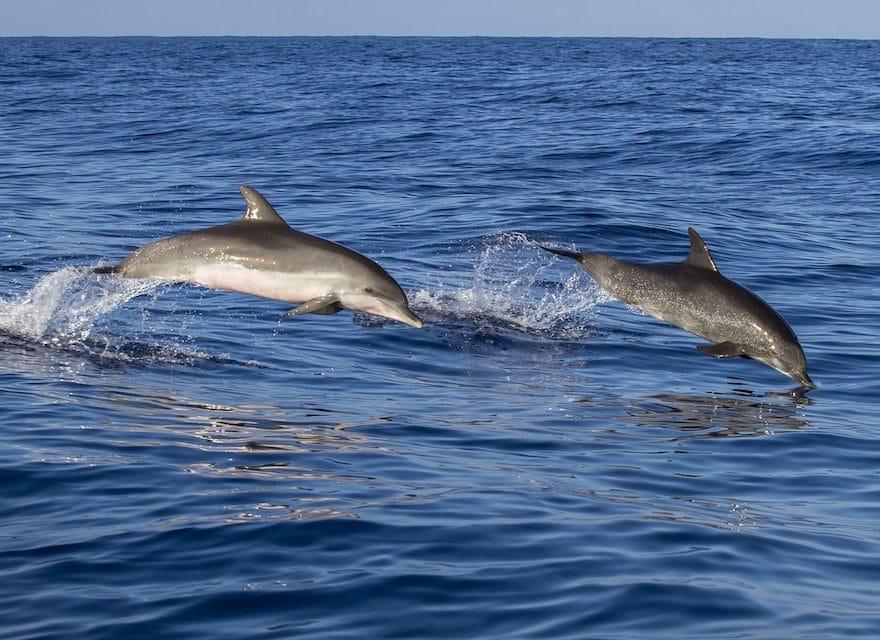 Der Delfin, der alle Herzen gewann