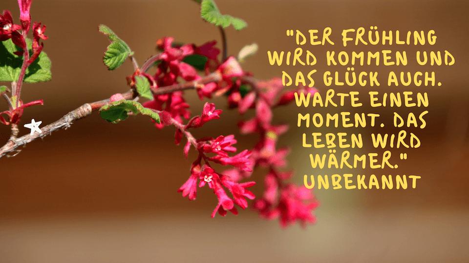 Der Frühling wird kommen und das Glück auch. Warte einen Moment. Das Leben wird wärmer.