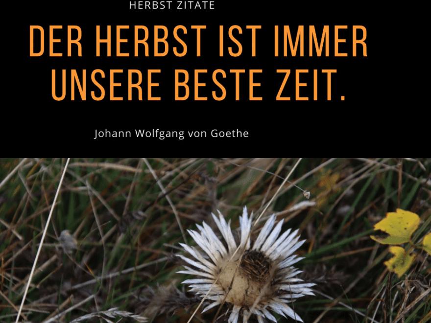 Herbstwiese - Herbst Zitate - Herbst Sprüche