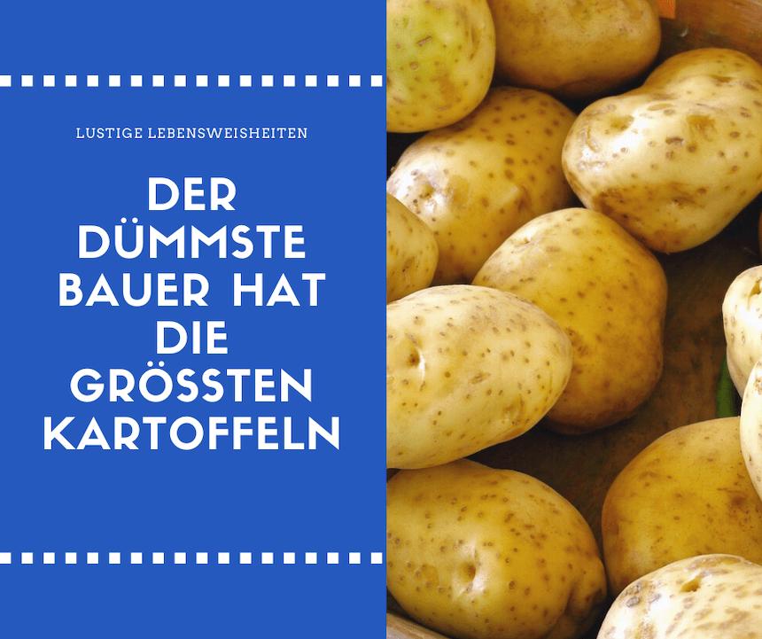 Lustige weisheiten - kartoffeln - Der dümmste Bauer hat die größten Kartoffeln