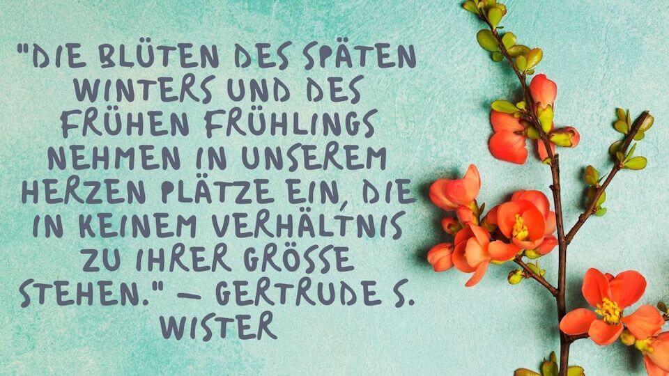 Die Blüten des späten Winters und des frühen Frühlings nehmen in unserem Herzen Plätze ein, die in keinem Verhältnis zu ihrer Grösse stehen. - Gertrude S. Wister - Die Blüten des späten Winters und des frühen Frühlings nehmen in unserem Herzen Plätze ein, die in keinem Verhältnis zu ihrer Grösse stehen. - Gertrude S. Wister