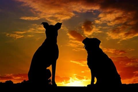 Die 2 niedlichsten Hundefilme