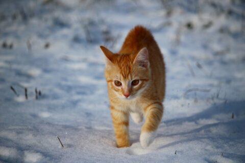 Drang einer Katze