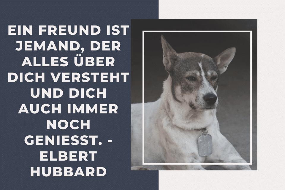 Treuer Hund - Ein Freund ist jemand, der alles über dich versteht und dich auch immer noch geniesst. - Elbert Hubbard
