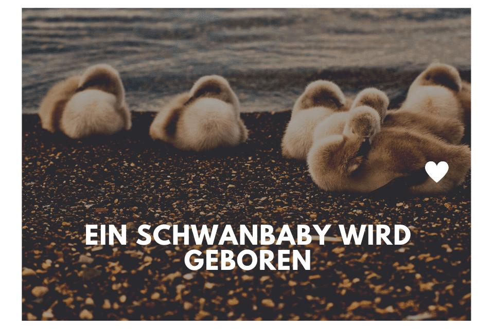 Ein Schwanbaby wird geboren