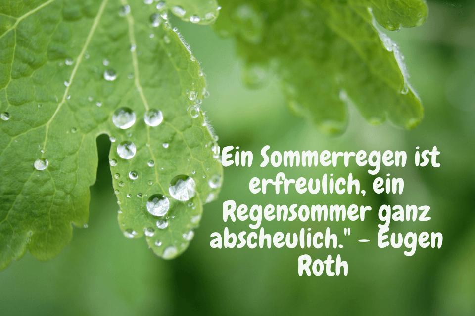 Regenperlen an grünem Blatt - Ein Sommerregen ist erfreulich, ein Regensommer ganz abscheulich. - Eugen Roth