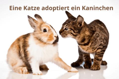 Kanninchen und eine Katze beschnuppern sich - Eine Katze adoptiert ein Kaninchen