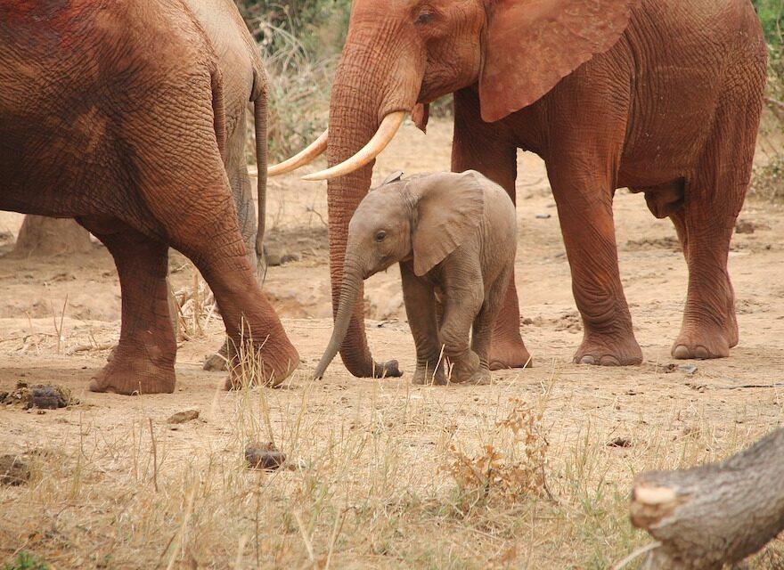 Elefanten Baby in eine Herde
