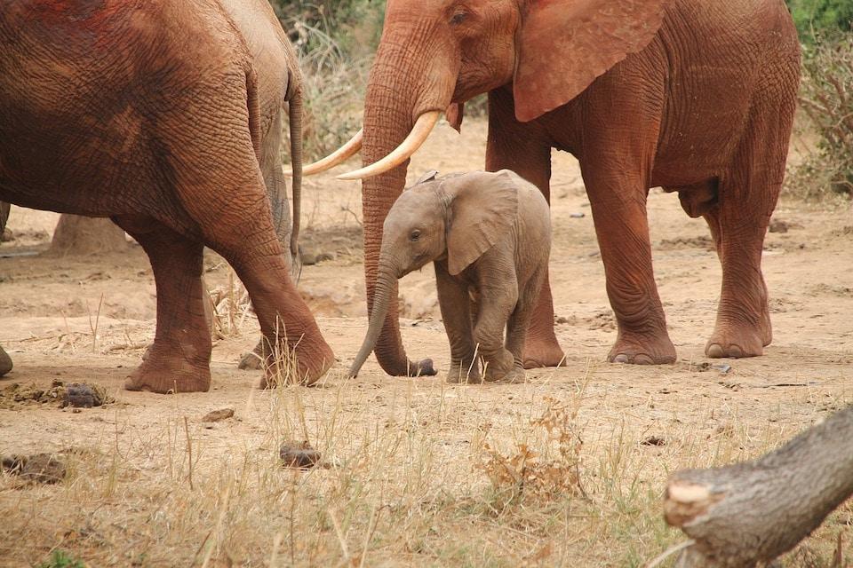 Baby Elefanten in eine Herde