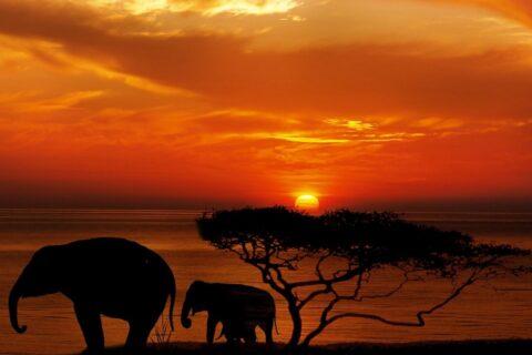 Elephant spielt mit einem Handy