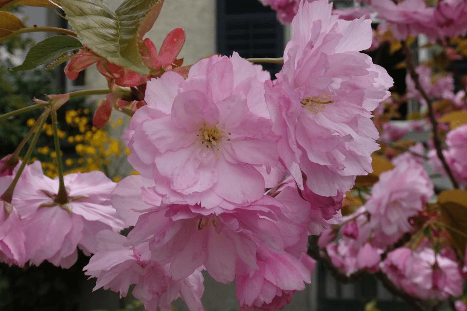 Blühtenpracht - Endphase des Lebens