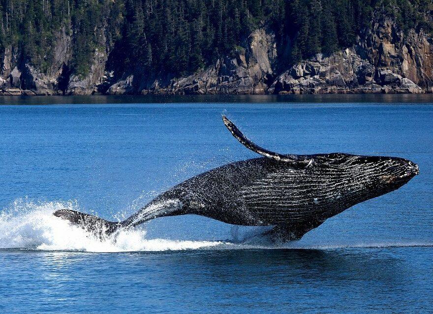 Faszination Tiefseewelten Wale