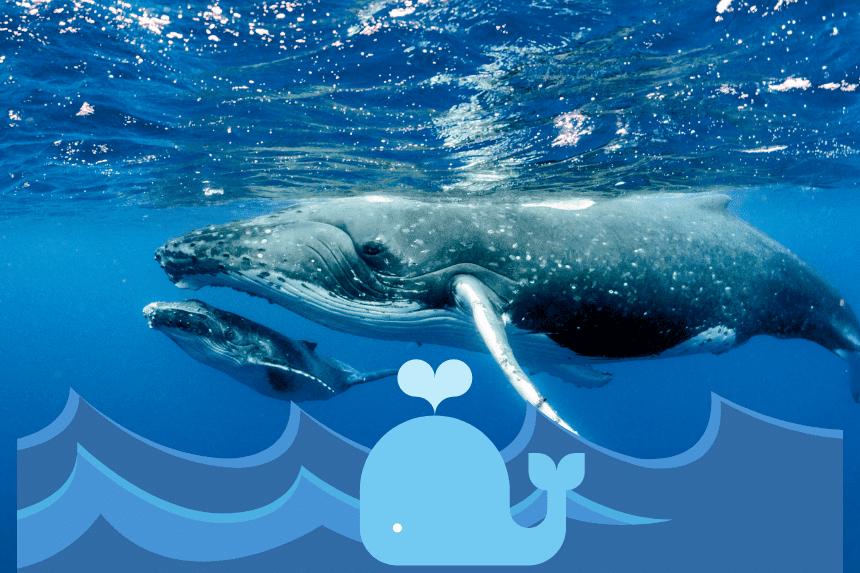 Faszination Tiefseewelten der Walfische