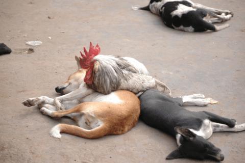 Freundschaft unter Tieren