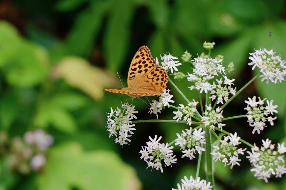 Für einen Neuanfang die Beziehung loslassen - Grafik Schmetterling