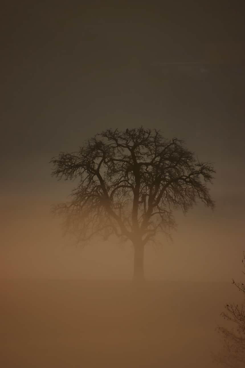 Spaziergang im Nebel, aus der Ferne wird ein Baum sichtbar