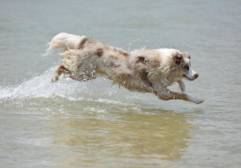 Humor - Ein Hund