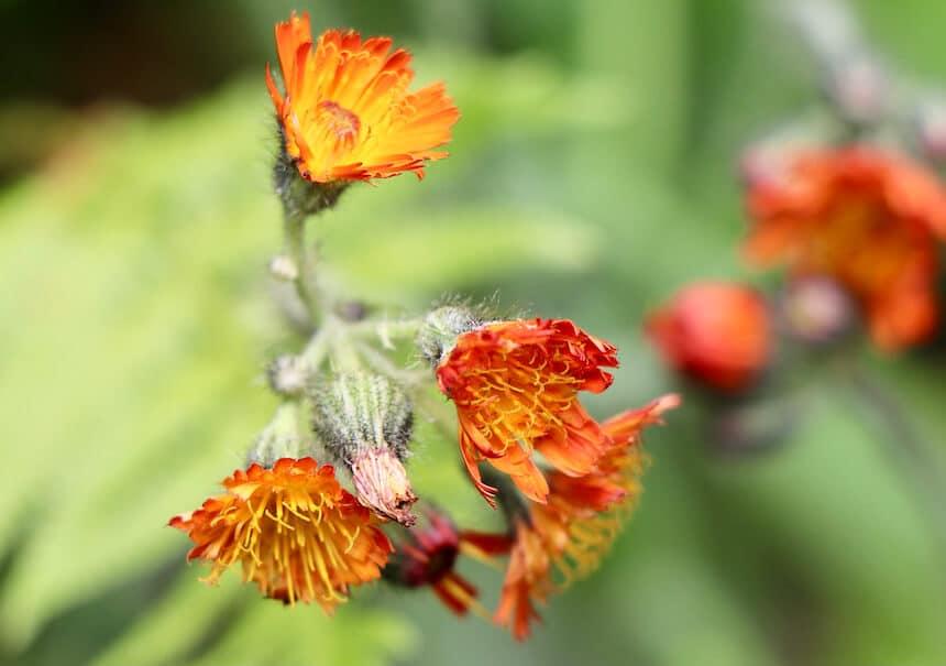 schöne orangene blume - liebessprüche
