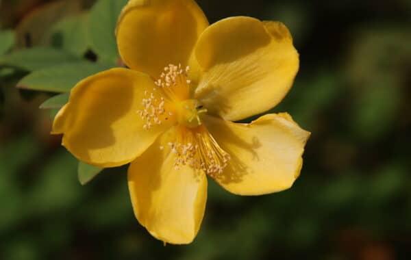 Gelbe Blume - Das Rad des Lebens