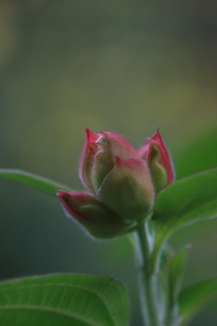 Blume - Symbol Wiedergeburt und Karma