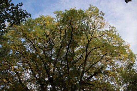 Herbst Baum mit schönen Blätter