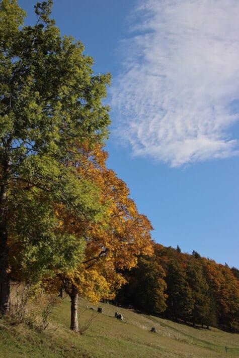 Stimmungsbild Mümliswil Herbst