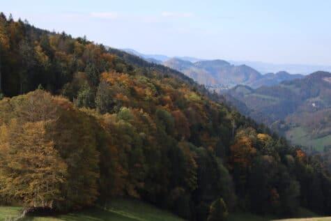 Bergkette und Herbstwald