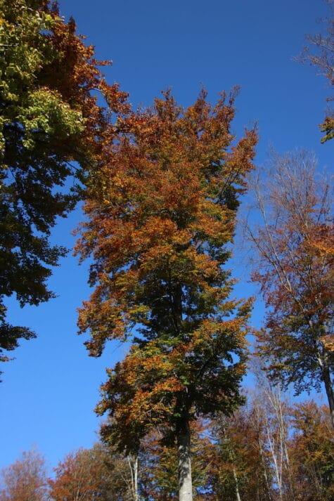 Goldbrauner Herbstbaum