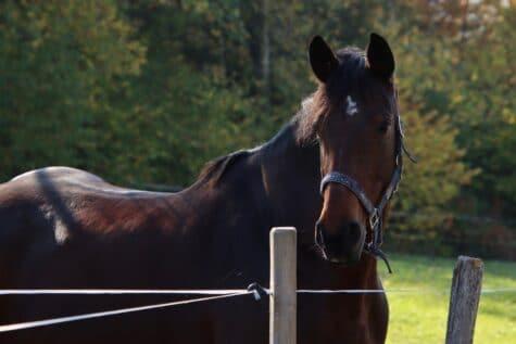 Schönes zutrauliches Pferd