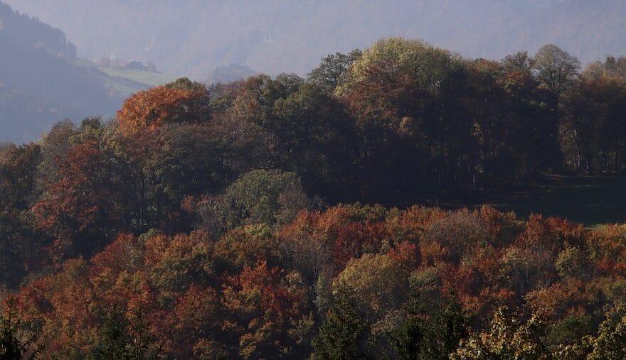 Farbenprächtiger Herbstwald