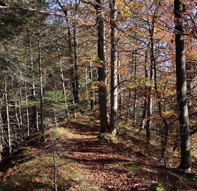 Herbstlicher wanderweg im Wald