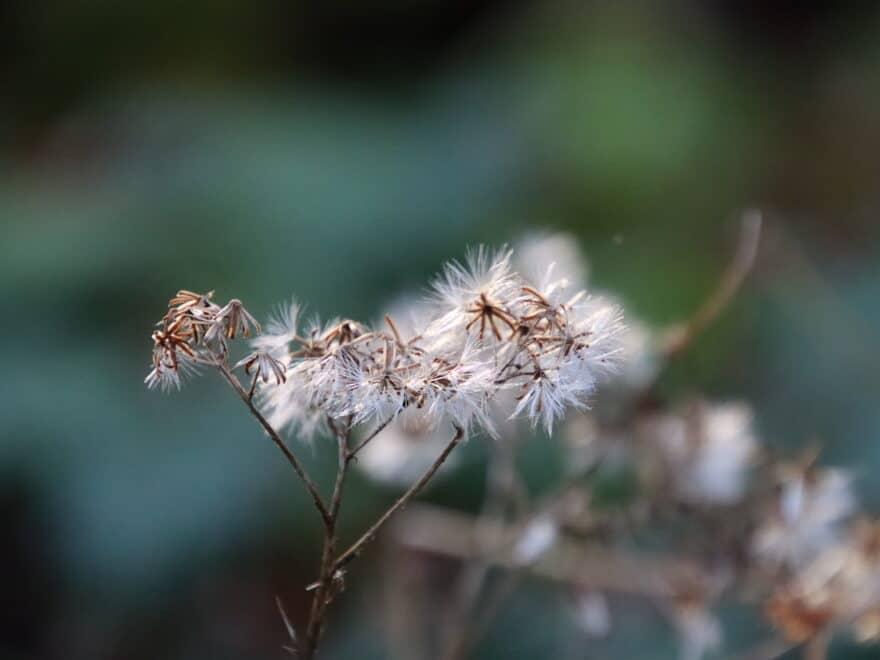 Herbstblume in schöner Pracht