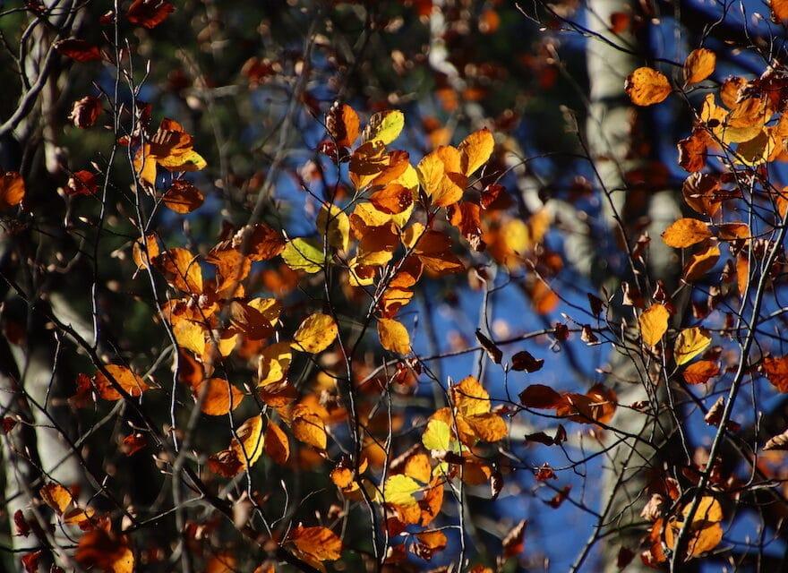 Herbstblätter an den Bäumen
