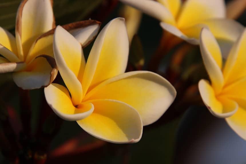 Blume gelb weiss - Mahatma Gandhi Zitate
