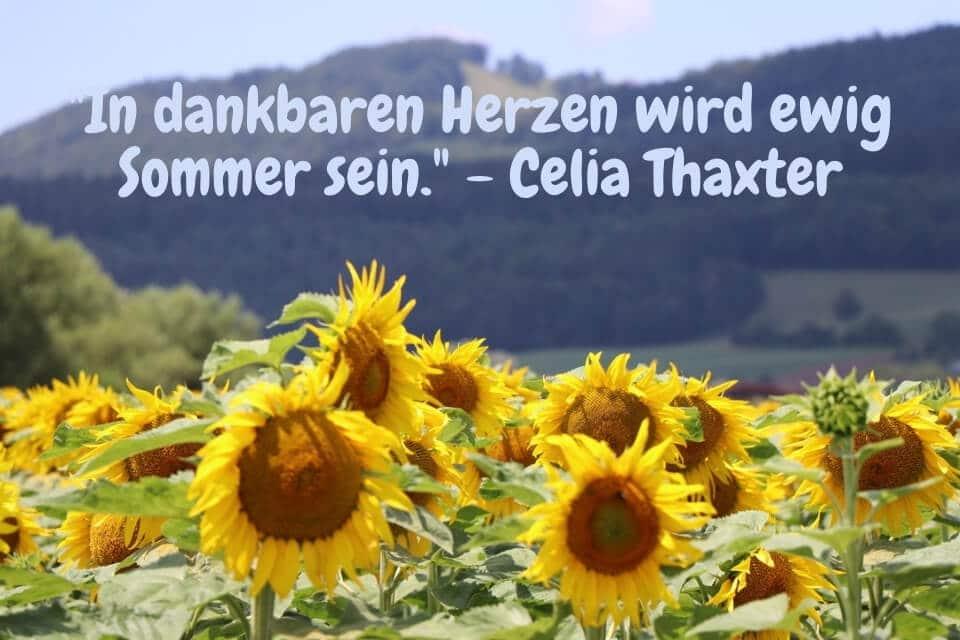 Sonnenblumenfeld - In dankbaren Herzen wird ewig Sommer sein. - Celia Thaxter