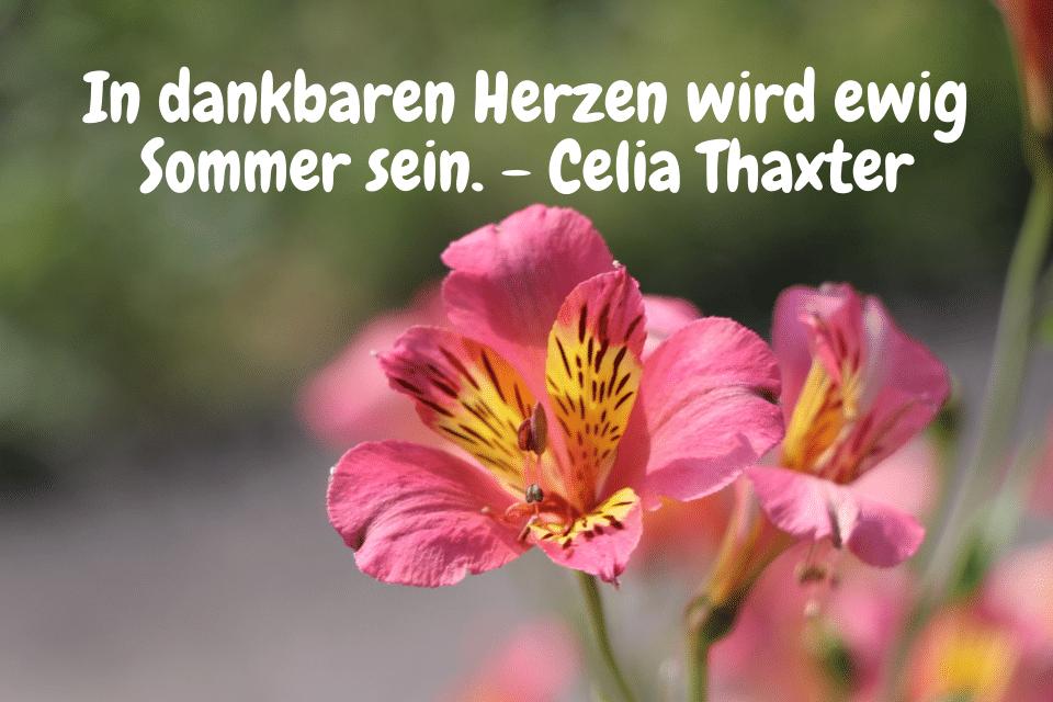Sommersprüche - In dankbaren Herzen wird ewig Sommer sein. - Celia Thaxter