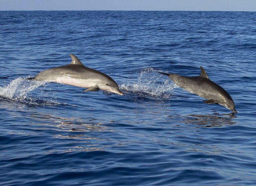 Katze mit einem Delphin