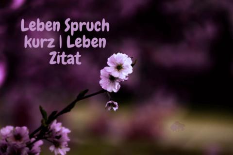 Ein violletes Blütenbild mit der aufschrift: Leben Spruch kurz | Leben Zitat