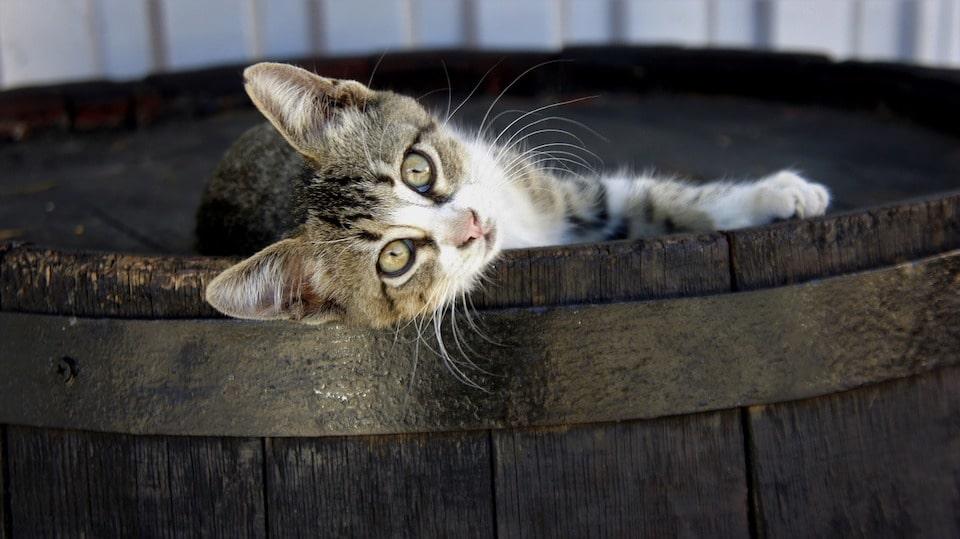 Lustige Katzen Videos
