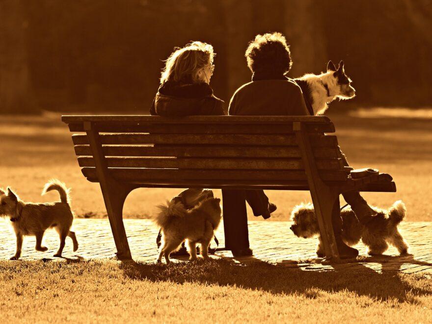 Mensch und Hund als Vehikel für Kreativität