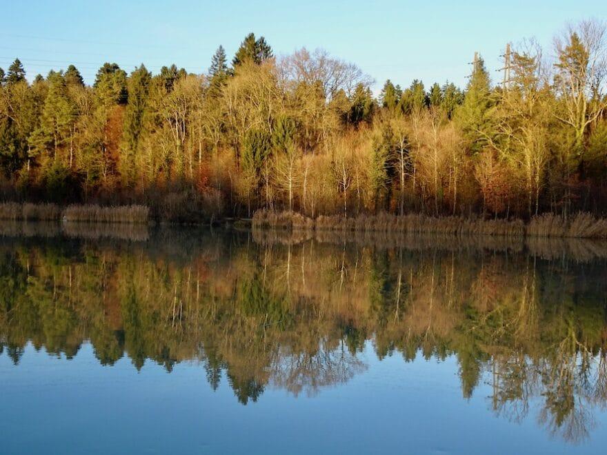 Das Wasser des Lebens - Im Fluss Spiegelbild Wald