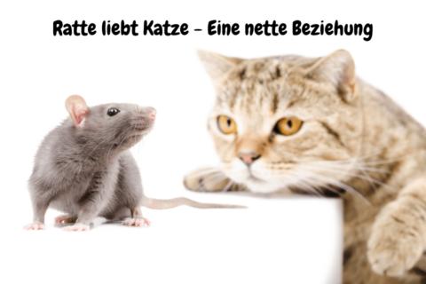 Ratte liebt Katze - Eine nette Beziehung
