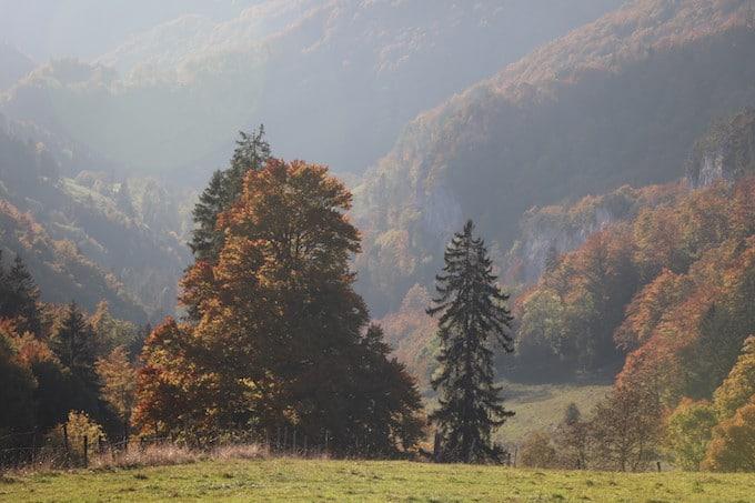 Reizueberflutung abbauen an einem malerischen schoenen Herbstwald