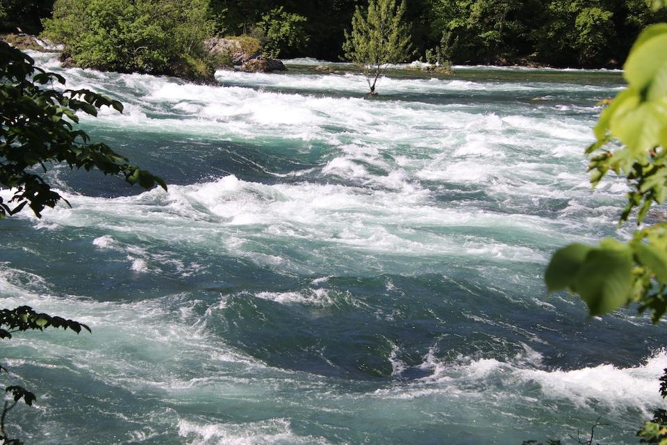 Rheinwassefall-Fluss des Lebens